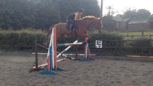 Roo jump2