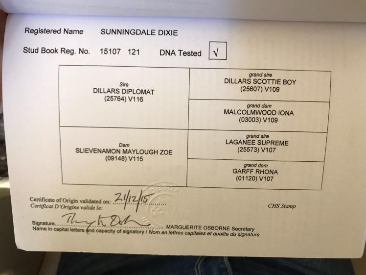 Sunningdale Dixie pedigree